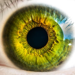 Lipid-Lowering Drugs May Reduce Risk of Diabetic Retinopathy